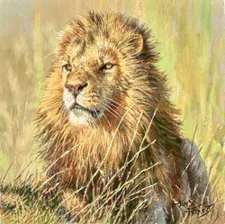 Lion of the Maasai Mara by Tony Forrest -  sized 10x10 inches. Available from Whitewall Galleries